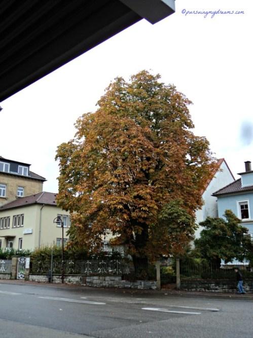 Pohon Besar di stasiun Kereta. Sinsheim
