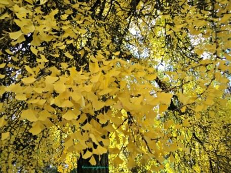 Herbstlaub autumn leaves