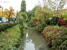 Masih banyak yang hijau. Sinsheim 15.10.2013