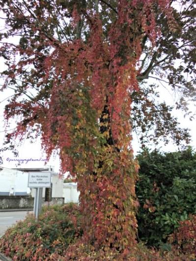 Cantik ya warna daun-daunnya. Awal Musim Gugur 2013