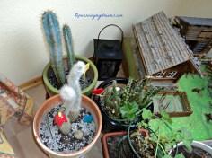 Kaktus diruang tanaman