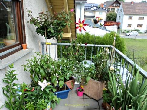 Sudut lain tamanku di atas balkon