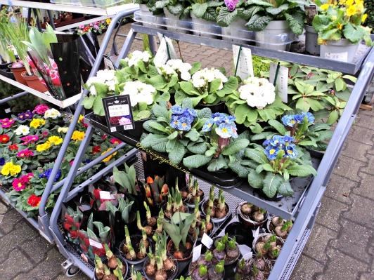 Bunga-bunga musim semi yang dijajakan di toko bunga. Foto 6 Februari 2014