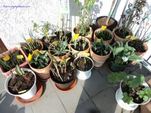 Tanaman-tanamanku cepat berbunga ya
