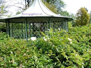 Taman di Bad Rappenau Jerman, iseng kesini ternyata ada bunga-bunga Peony