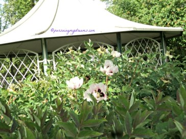 Peonies king of flowers A symbol of spring, it is also used as a metaphor for female beauty and reproduction