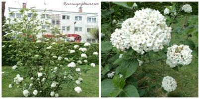 Tidak tahu nama bunga ini