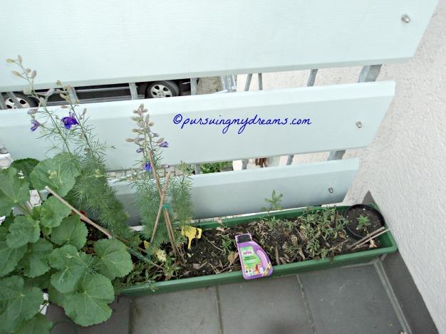 Mau Bongkar pot ini karena bunga-bunganya sudah mati