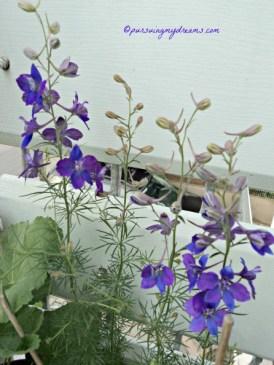 Cantik ya warna bunga Kosmosnya