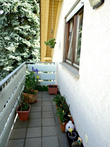 Pemandangan Balkon Depan, kalau pagi adem banget disini