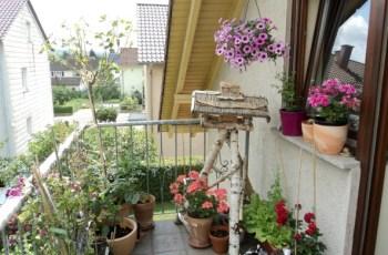 Sudah rame bunga warna warni di Balkon belakang