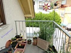 Balkon Belakang rumahku