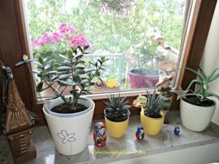Saya suka mengkombinasi tanaman dengan hiasan (pajangan) seperti contohnya souvenir dari Rusia Boneka 3 itu disebut Matroschka, nah kalau paling kiri miniatur rumah Batak