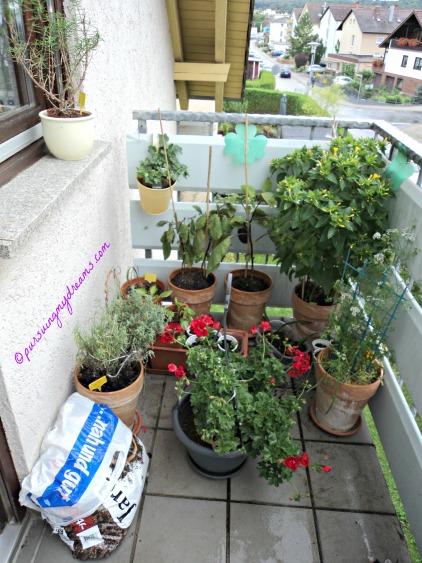 Tanaman di Balkon depan. Geranium gantung warna merah di turunin dulu karena hujan deras dan angin kencang. Kebunku di Akhir Musim Panas
