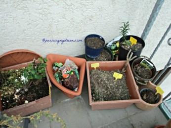 Tanaman-tanaman yang gagal tidak tumbuh ataupun pada rusak. Hancur hatiku hahaha