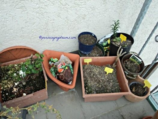 Tanaman-tanaman yang gagal tidak tumbuh ataupun pada rusak