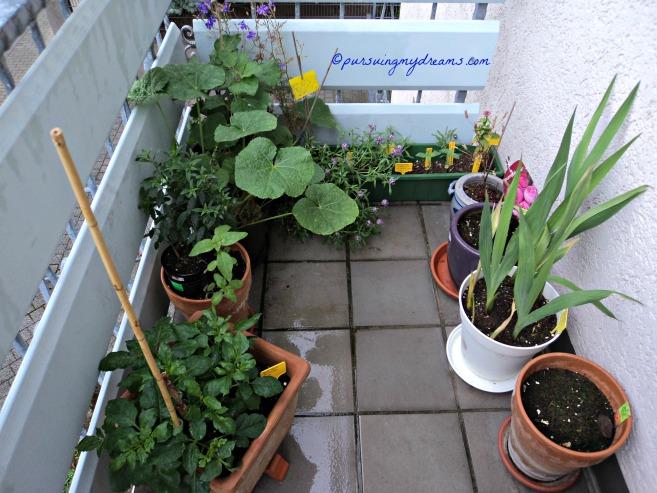 Tanaman bunga-bunga di balkon depan ada dahlia, gladiol, hollylock dll