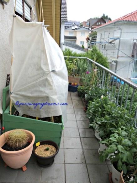 Pemandangan Balkon Belakang. Berhubung hujan melulu tanaman tomat jadi ditutupi supaya tidak busuk