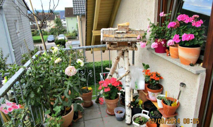 My Balcony Garden – BEC