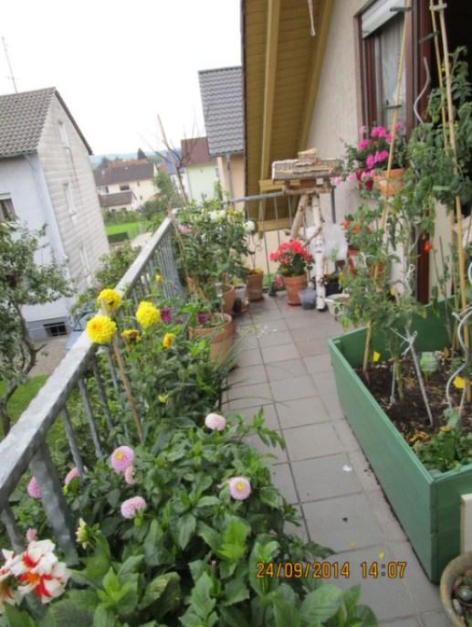 Walau kadang stress ngurus Benjamin, kalau saya sebentar aja di balkon ini lihat bunga-bunga, hati jd ademmm