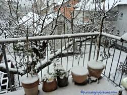 Hancur minaaa tanaman-tanamanku tertutup salju