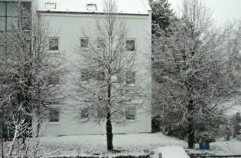 Nasib pohon besar ketika musim dingin