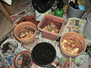 Pot yang saya berikan sampah dapur minimal ukurannya 20 cm karena proses komposting mengeluarkan panas, kalau potnya kecil kuatir tanaman malah rusak