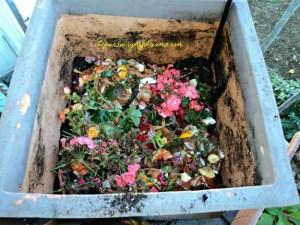 Menyiapkan pot untuk menanam bibit tulip. Pada dasar pot saya taruh tanah sedikit, lalu taruh sampah dapur