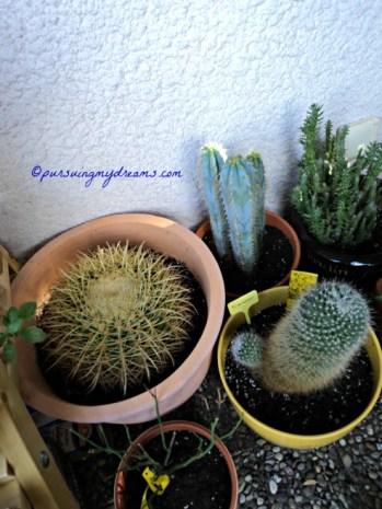 my danger Cacti :)