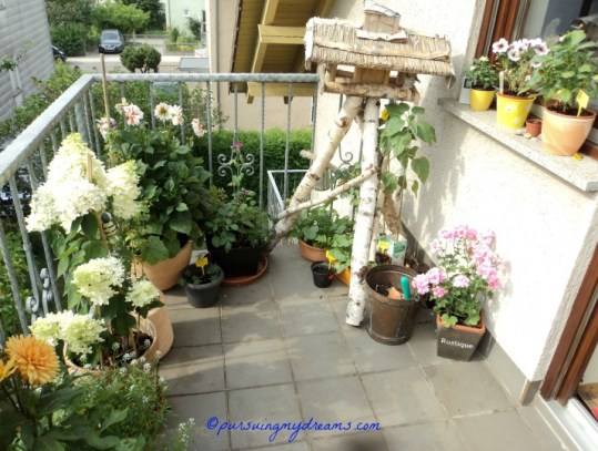 My balcony garden on summer 2013