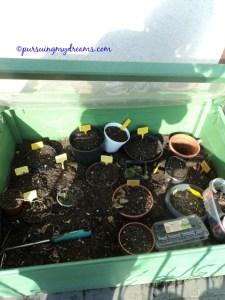 Green house mini ini selama musim dingin berguna untuk menyimpan semua umbi bunga lili