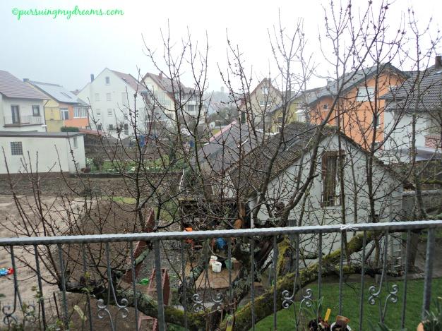 Pohon Cerry tetangga. Akhir April bakalan bermekaran bunganya