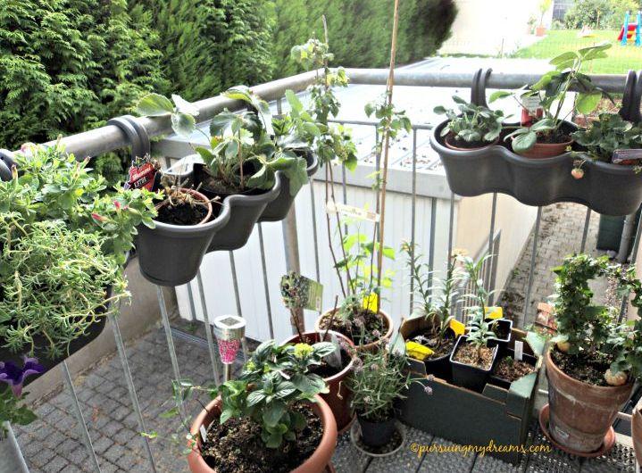 Curhat Berkebun 2015 – yang sudah Berbunga