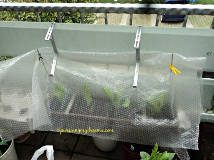 Ga Tahan Lihat Diskonan. Ceritanya bikin green house mini, alias pot ditutupi plastik aja