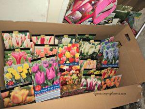 Bibit tulip dan bibit musim semi lainnya. Jualanku tahun 2015