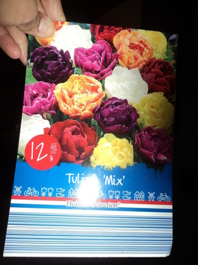 Tulip mix dobel flower