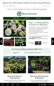 Diskon 20% mawar david austin dari UK, galau pengenn beli tapi harganya itu loh