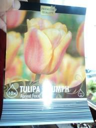 Tulip Triump Aprikot Foxx