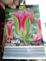 Tulip Virichic
