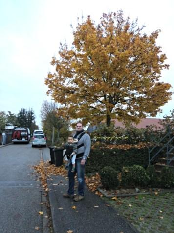Warna pohon saat musim gugur