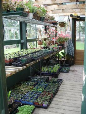 Pengen Greenhouse begini