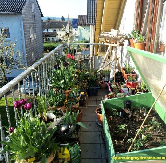 Musim Semi di Balkon Rumahku