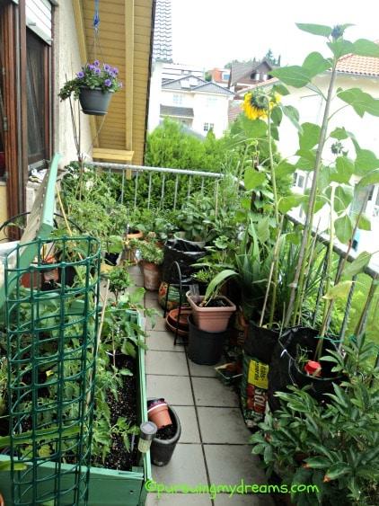 Kebun di balkon belakang, sudah dirapikan jadi ada sedikit tempat buat melangkah. Bahagia semalam habis hujan deras, jadi sejuk nih. Foto 25.06.2016
