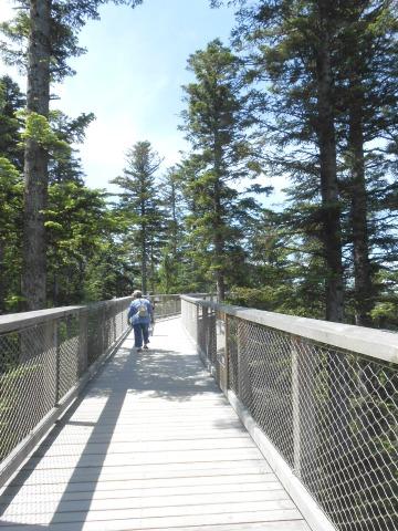 Uniknya Treetop Walk Melihat Hutan dari Ketinggian