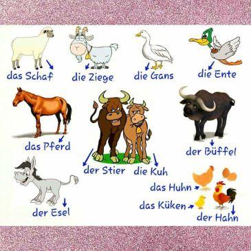 German Animal vocabulary