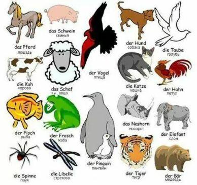 Nama-nama Hewan dalam bahasa Jerman