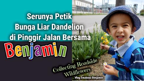 Serunya Petik Bunga Liar Dandelion di Pinggir Jalan