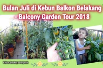 Asyiknya Bulan Juli di Kebun Balkon Belakang