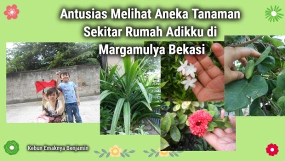 Antusias Melihat Aneka Tanaman Sekitar Rumah Adikku di Margamulya Bekasi