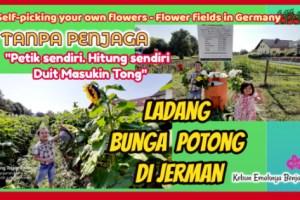 Ladang Bunga Potong di Jerman Tanpa Penjaga Pembeli Petik dan Hitung Sendiri yang dibeli Uang Masukin Tong